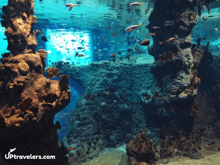 Рыбки в океанариуме (африкариум)