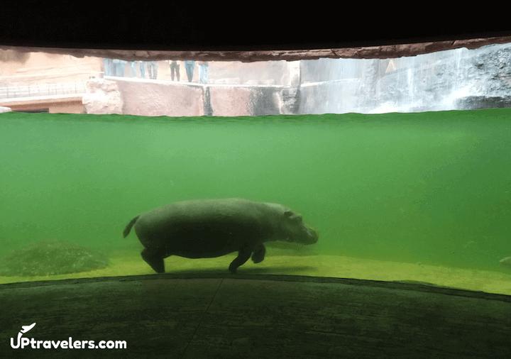 Вроцлавский зоопарк и носорог (фото)